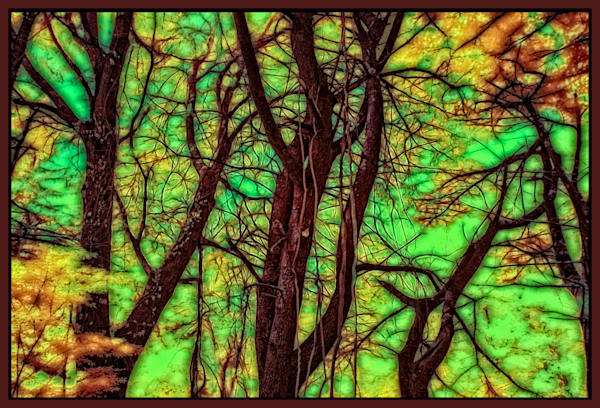 Trees like Stained Glass