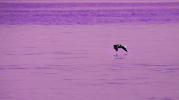 The Seas Of Purple Photography Art | Peter J Schnabel Photography LLC