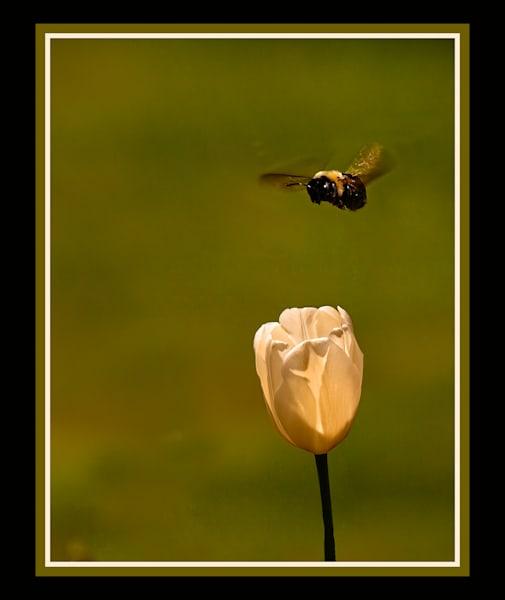 Buzzing a flower