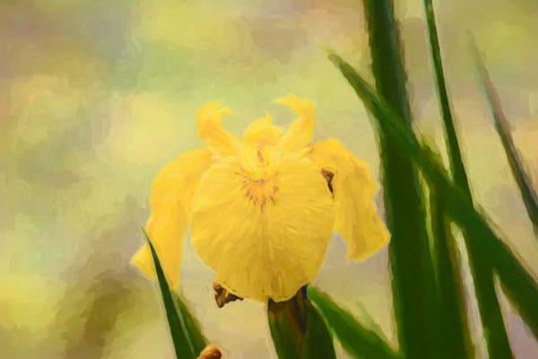 Soft Yellows