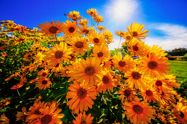 The Flowers of summer