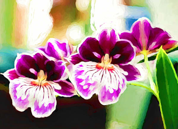 Orchid Twins