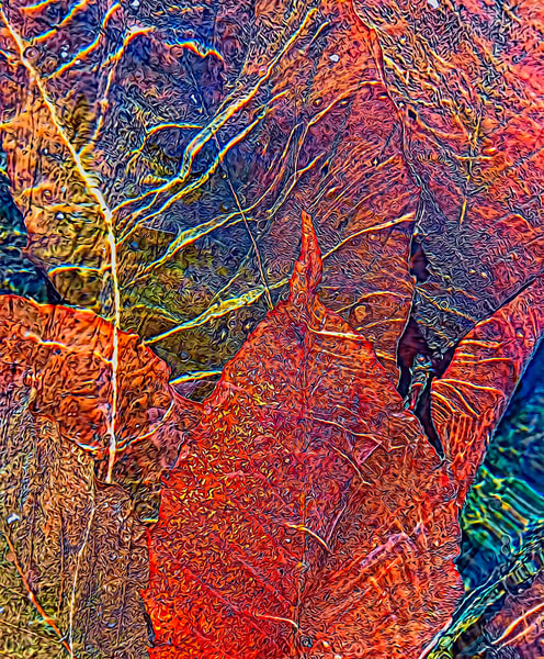 Spreading Wonder|Fine Art Photography by Todd Breitling|Trees and Leaves|Todd Breitling Art|