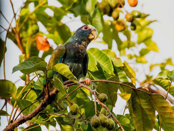 Hello from Costa Rica