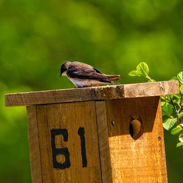 Birds at Home