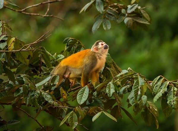 Monkey Thanks