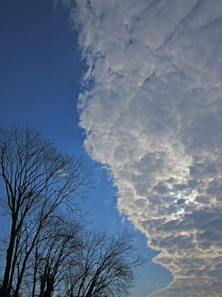 Cloud and Trees|Fine Art Photography by Todd Breitling|Trees and Leaves|Todd Breitling Art|