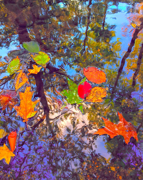 Trees and Leaves|Fine Art photography by Todd Breitling|One of a kind images that  explore unique perspectives in photography|Various sizes and mediums available for sale