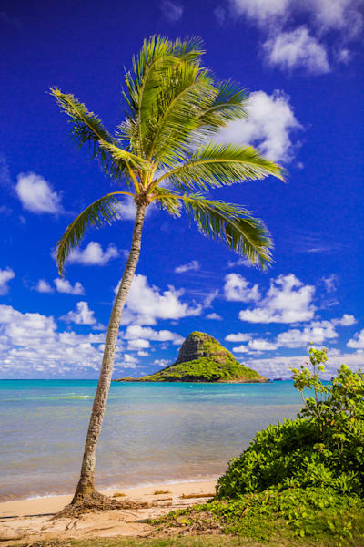 Hawaii Photography  |  Coconut Cap by Shane Myers