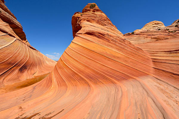 The Wave in Arizona