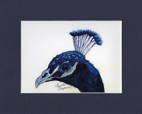 Sapphire Peacock