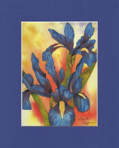 Bold & Beautiful Blue Iris