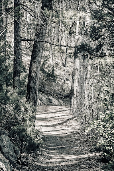 Walden Woods Photography Art | Peter J Schnabel Photography LLC