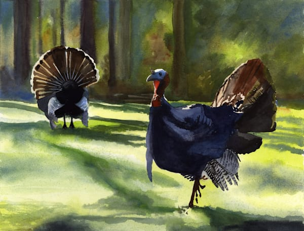 Forest Turkeys and Landscape Print