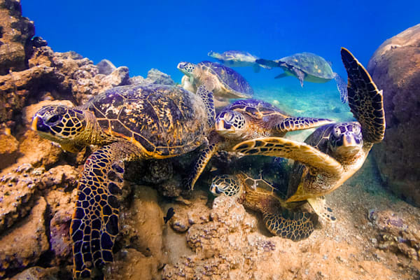 Marine Photography  |  Turtle Town by Shane Myers