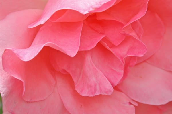 Pink Photography Art | Vincent DiLeo Fine Art Photography