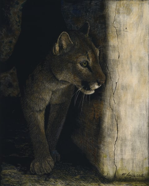 A Mountain Lion steps into Your Light