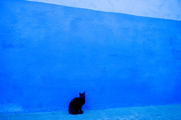 Black Cat Posing, Blue Wall, in Morocco | Fine Art Photography Prints