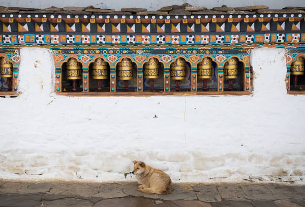 Peaceful Dog Temple Bhutan