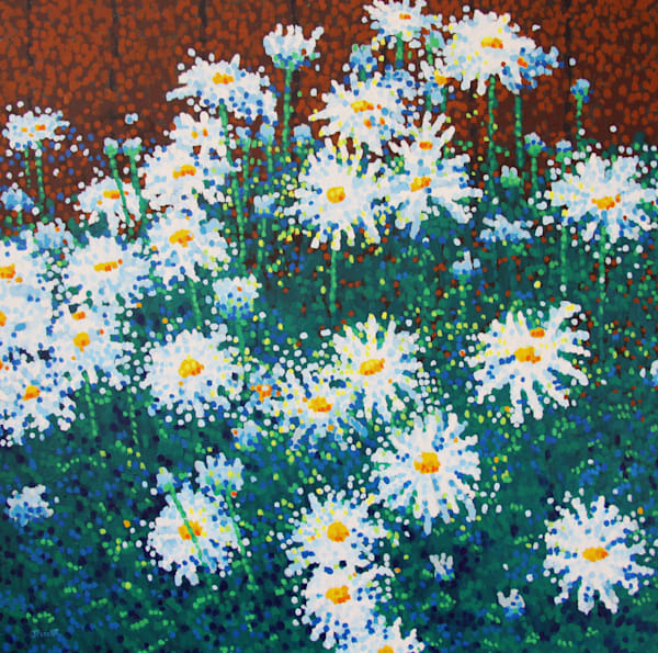 Backyard Daisies