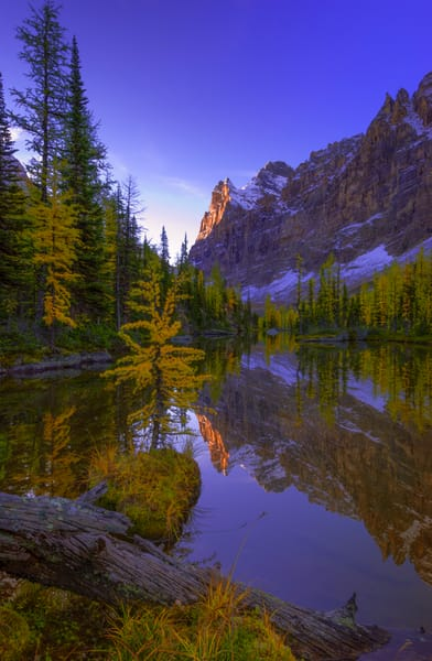 Larches , big and small in the Larch Valley. Banff National Park | Rocky Mountains | Canadian Rockies|Gita Photos