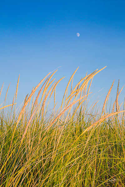 Moon over Beach Grasses