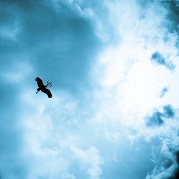Stork Building A Nest | Morocco