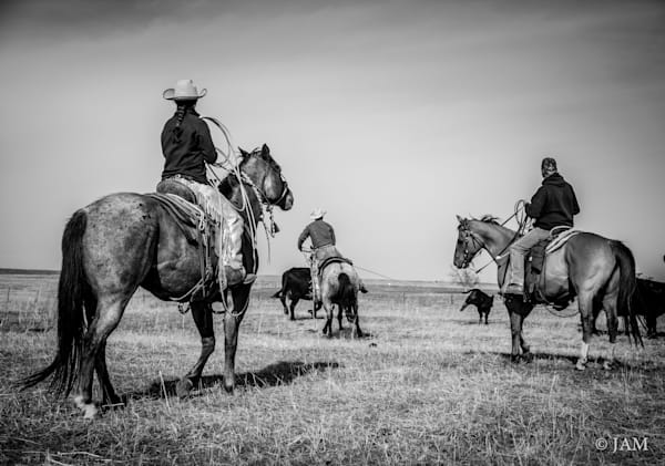 0070 Chasing cattle.2