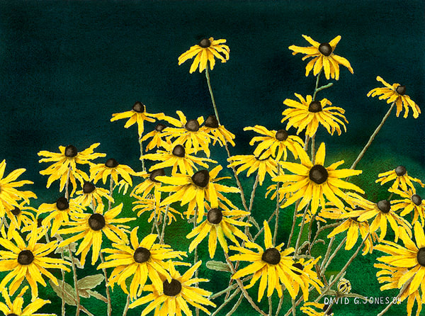 Black Eyed Susans Art | Digital Arts Studio / Fine Art Marketplace