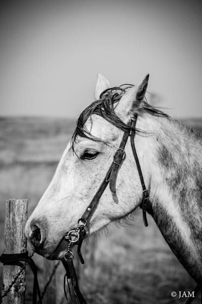 0083 Horse