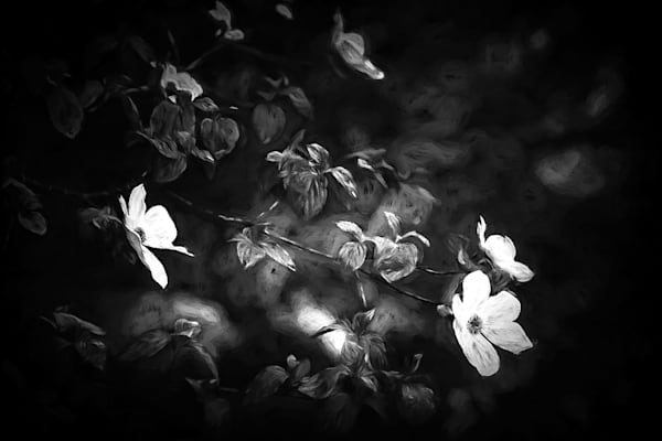 Impressions of Yosemite Dogwoods in Infrared