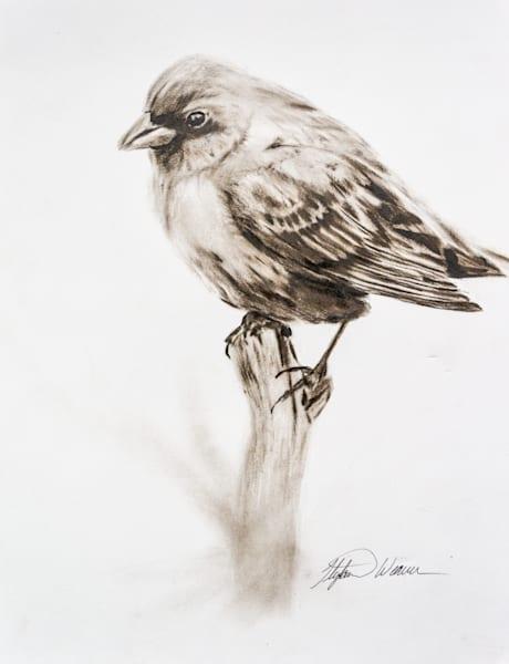 Bird Waiting On Spring