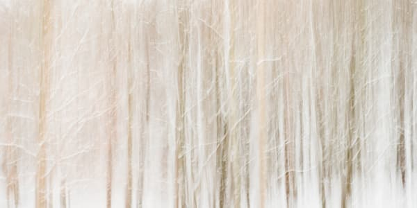 Photographs of Trees for sale as fine art.