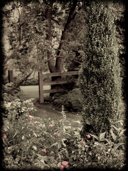 In the Formal Garden #2