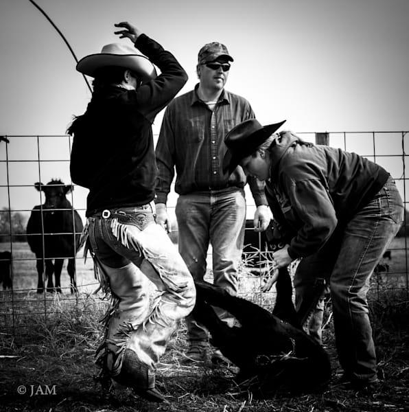 0101 Wrestling cattle