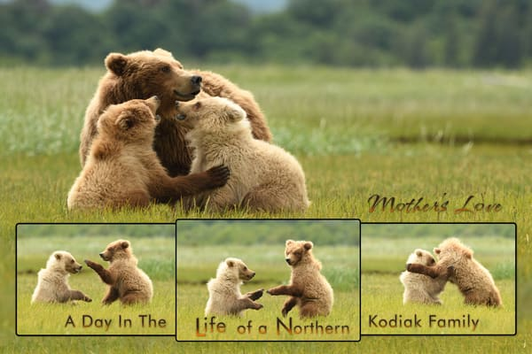 Mothers Love Female Sow with two Cubs - Katmai Alaskan Photographs - Alaska Brown Bears - Fine Art Prints on Metal, Canvas, Paper & More By Kevin Odette Photography