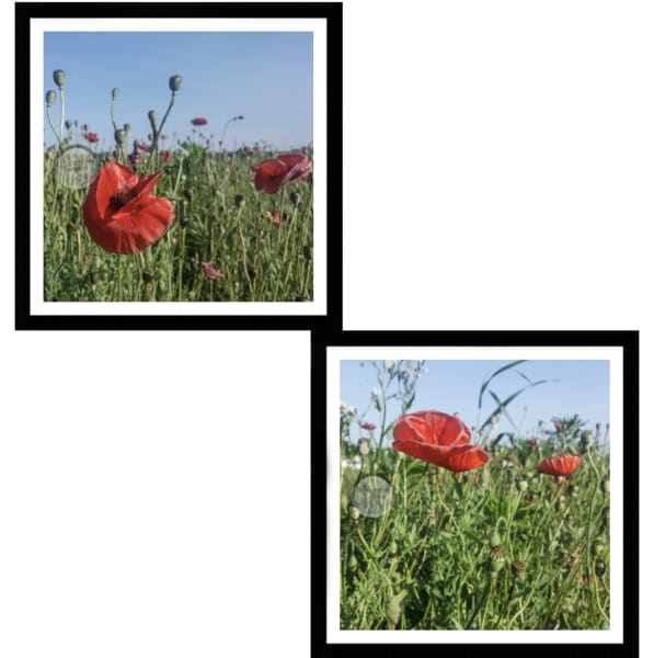 Wild Poppies Framed 2 piece