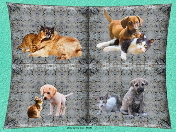 Dogs Loving Cats - The Gallery Wrap Store