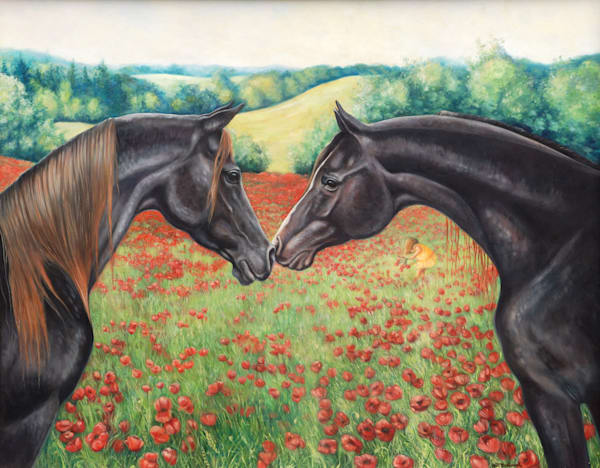 black Arabian horses in a poppy field