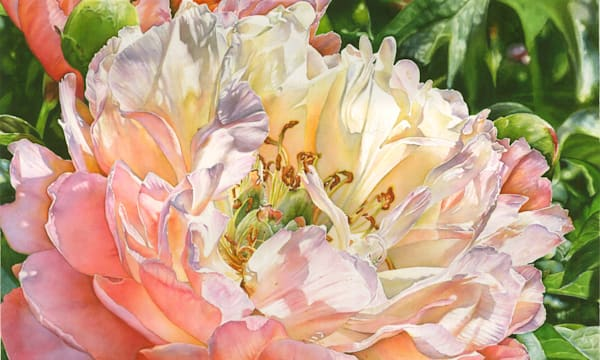 Watercolor art original of a glowing Peony. Art prints and  canvas wraps available.