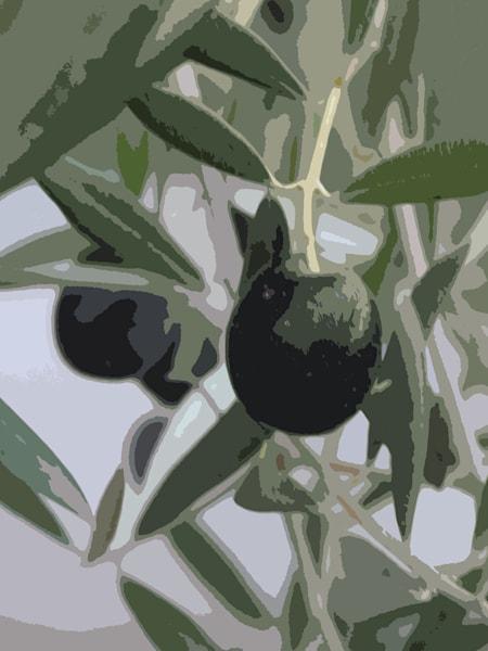 CHARLES KRUG OLIVES
