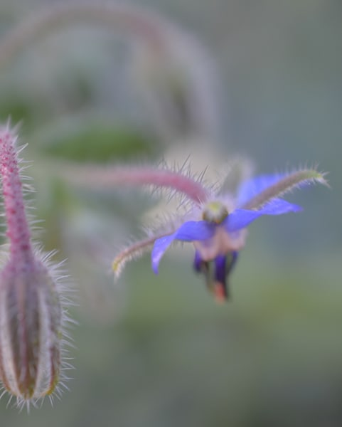 Blueborage3 Photography Art | LIGHT POETRY PHOTOS