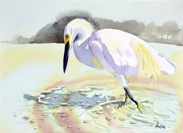 Hunting Egret - Snowy Egret hunting on Sanibel Beach
