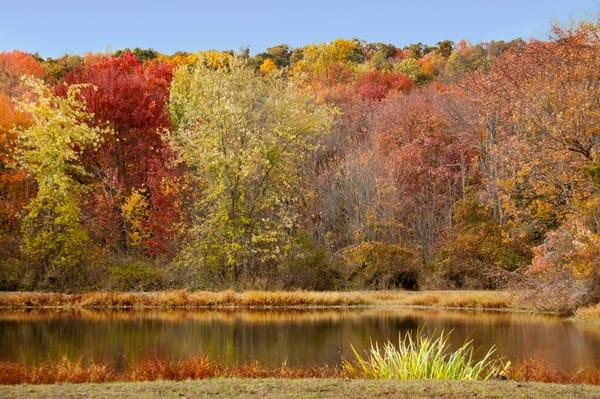 Rock Hall Maryland Fall Foliage