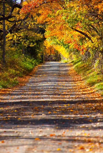 Fall Foliage inFair Hill Maryland