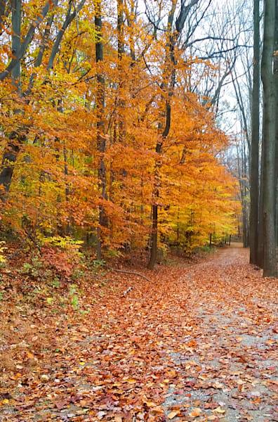 Autumn Fall Leaves in Prestigious Fair Hill Marland