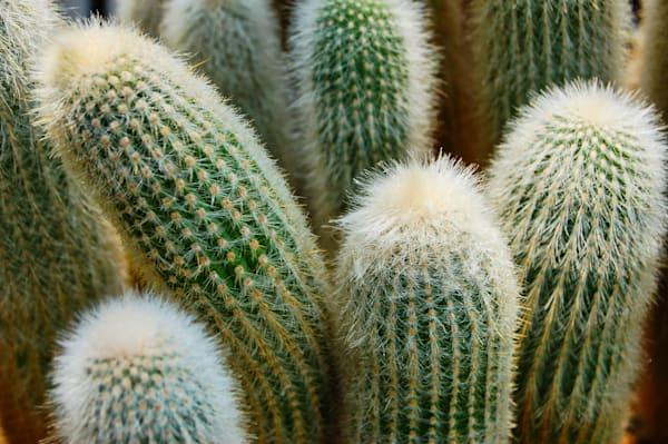 Fuzzy Cactus Needles