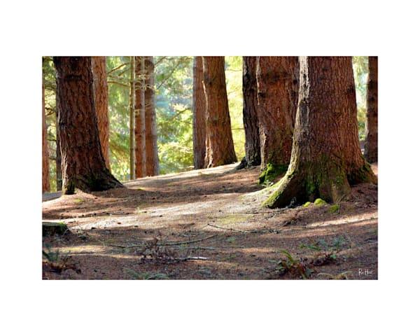 16x20 Coastal Forest