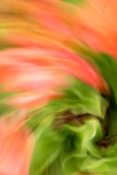 ArtShow 017 WindTulip