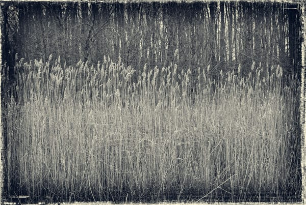 Reeds and Woods (deep)